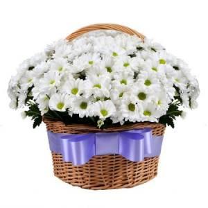 Корзина 15 кустовой белой хризантемы R297